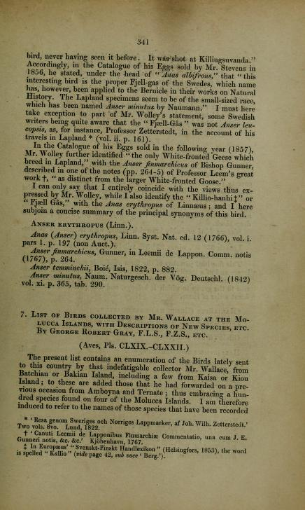 List of Birds Collected by Mr. Wallace at the Molucca Islands, with Descriptions of New Species, etc.